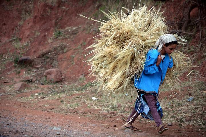 Autonomisation économique et sociale des femmes vulnérables des régions de l'Oriental et de Meknès- Tafilalet, Maroc (phase 1)